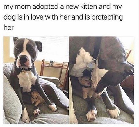 Protected Kitten