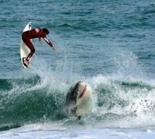Shark and surfer.jpg