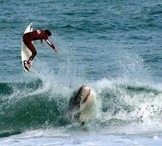 Shark and surfer.jpg