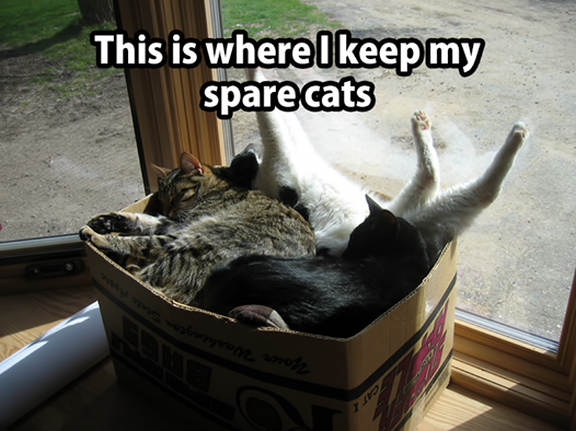 Spare cats