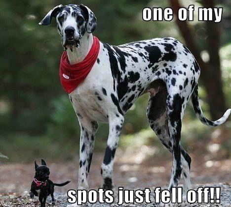 Spots.jpg