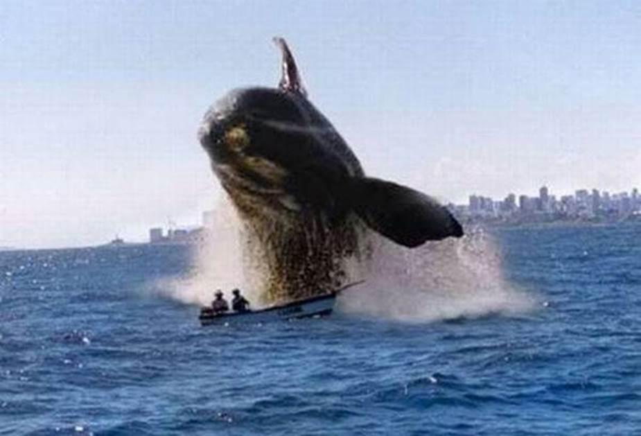 Whale splashing.jpg