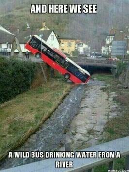 Wild Bus-1.jpg