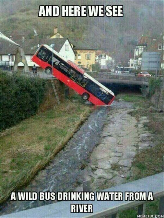 Wild Bus.jpg