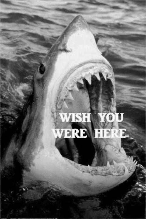 Wish You Here.jpg