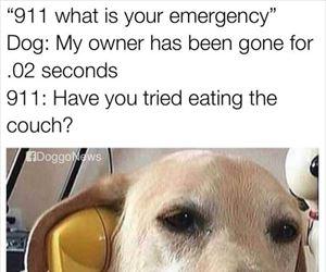 a-dog-emergency_th