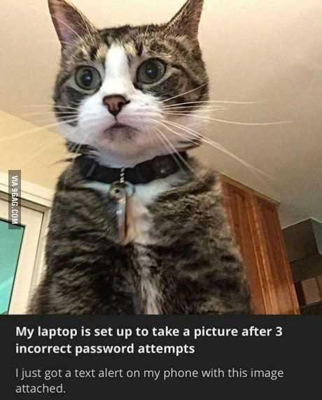 accidental-cat-picture-laptop