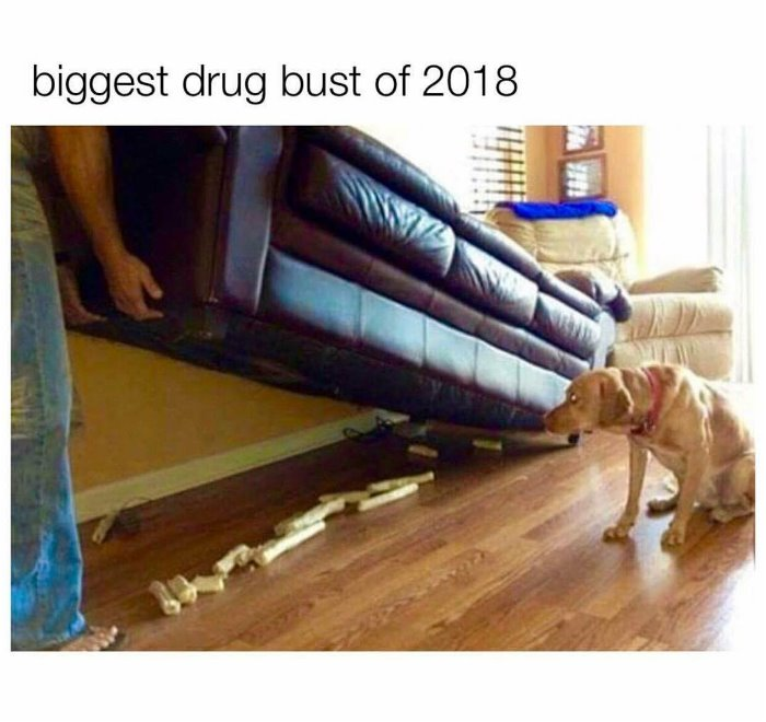 biggest-drug-bust-of-the-year