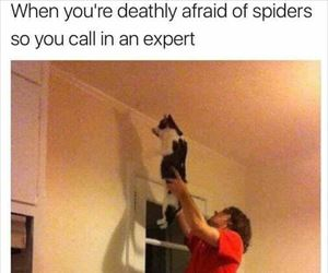 calling-in-an-expert_th