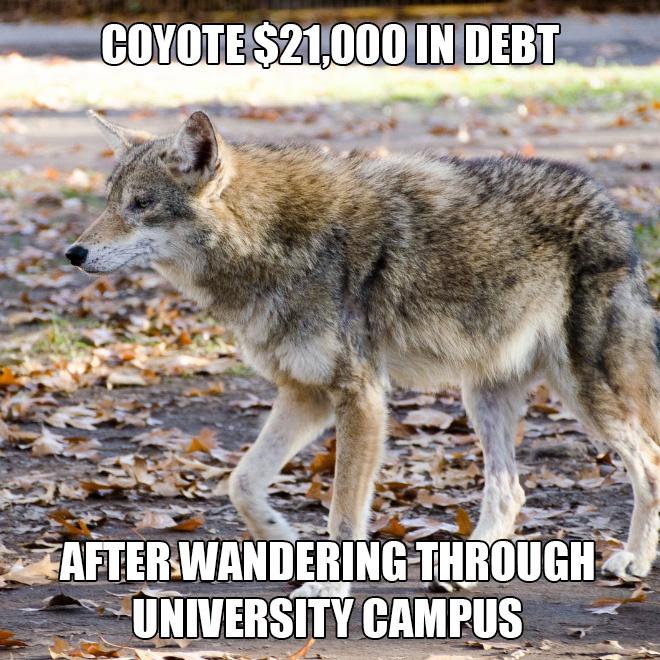 coyote-1