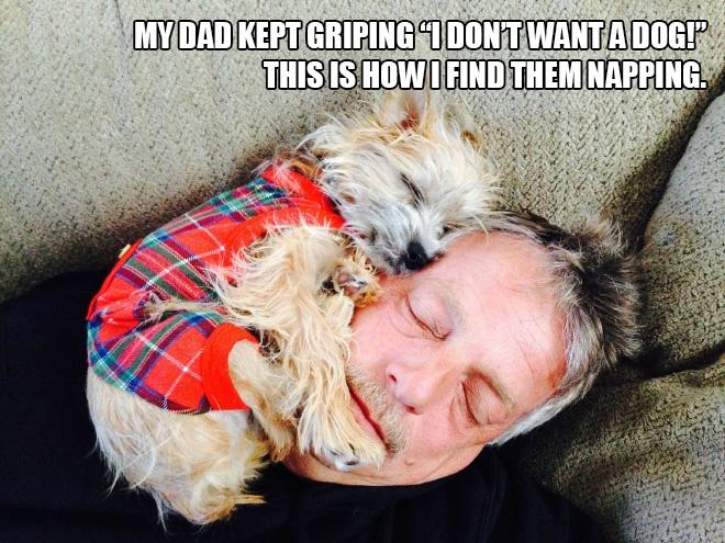dads-vs-dogs1.jpg