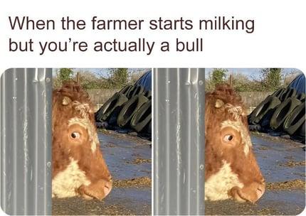 farmer-starts-milking