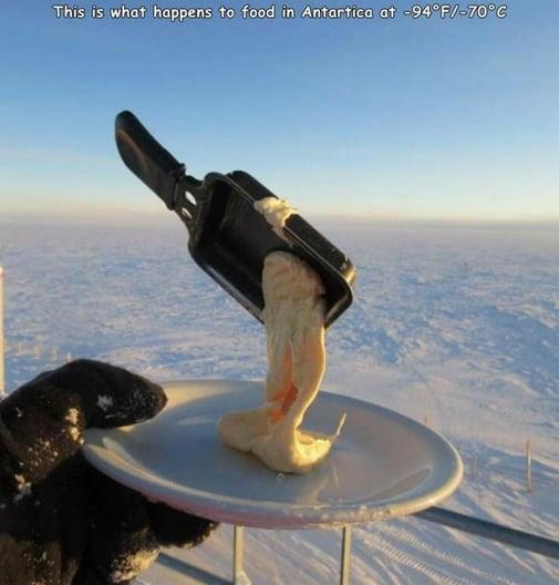 food in Antartica