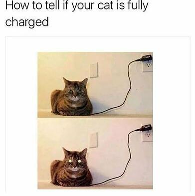 full-charged-cat