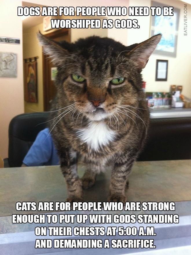 mean-cat.jpg
