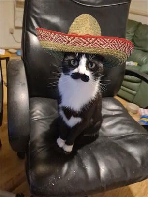 mucho-mustache