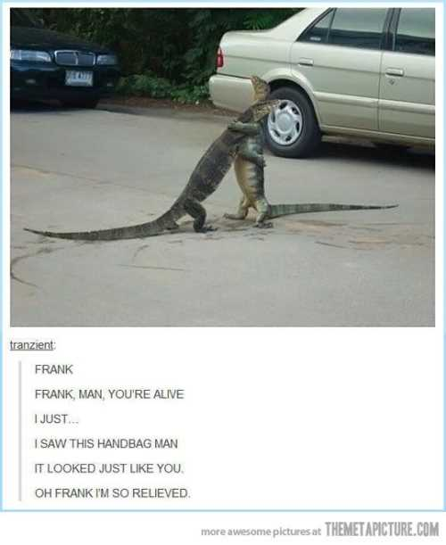 two-lizards-hugging-in-the-road